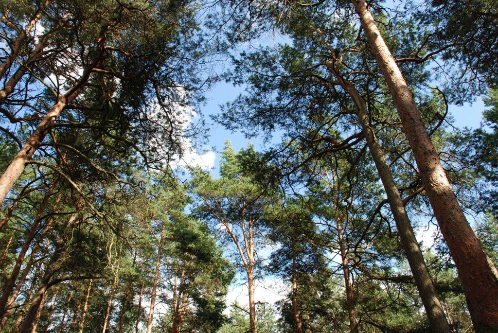 czyste powietrze las